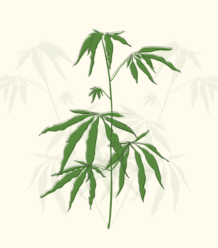 illustration of weed plant